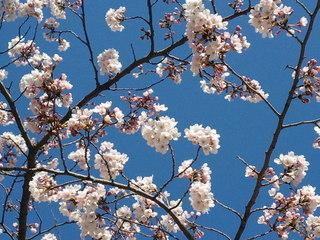 2011-04-04 15.03.05.jpg