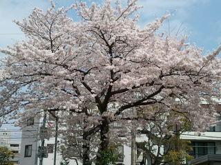 2011-04-10 13.45.24.jpg