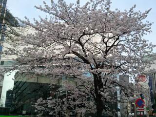 2011-04-10 16.25.44.jpg
