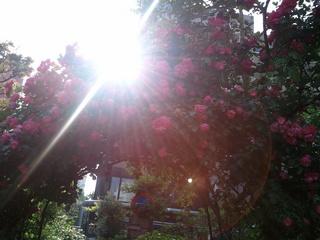 2011-05-20 16.03.06.jpg